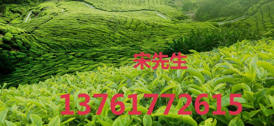2021年上海国际茶博会/上海茶博会/上海茶叶展